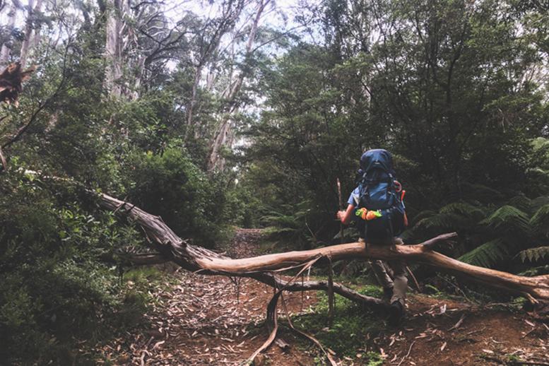 Corker Trail, Amelia Gillies
